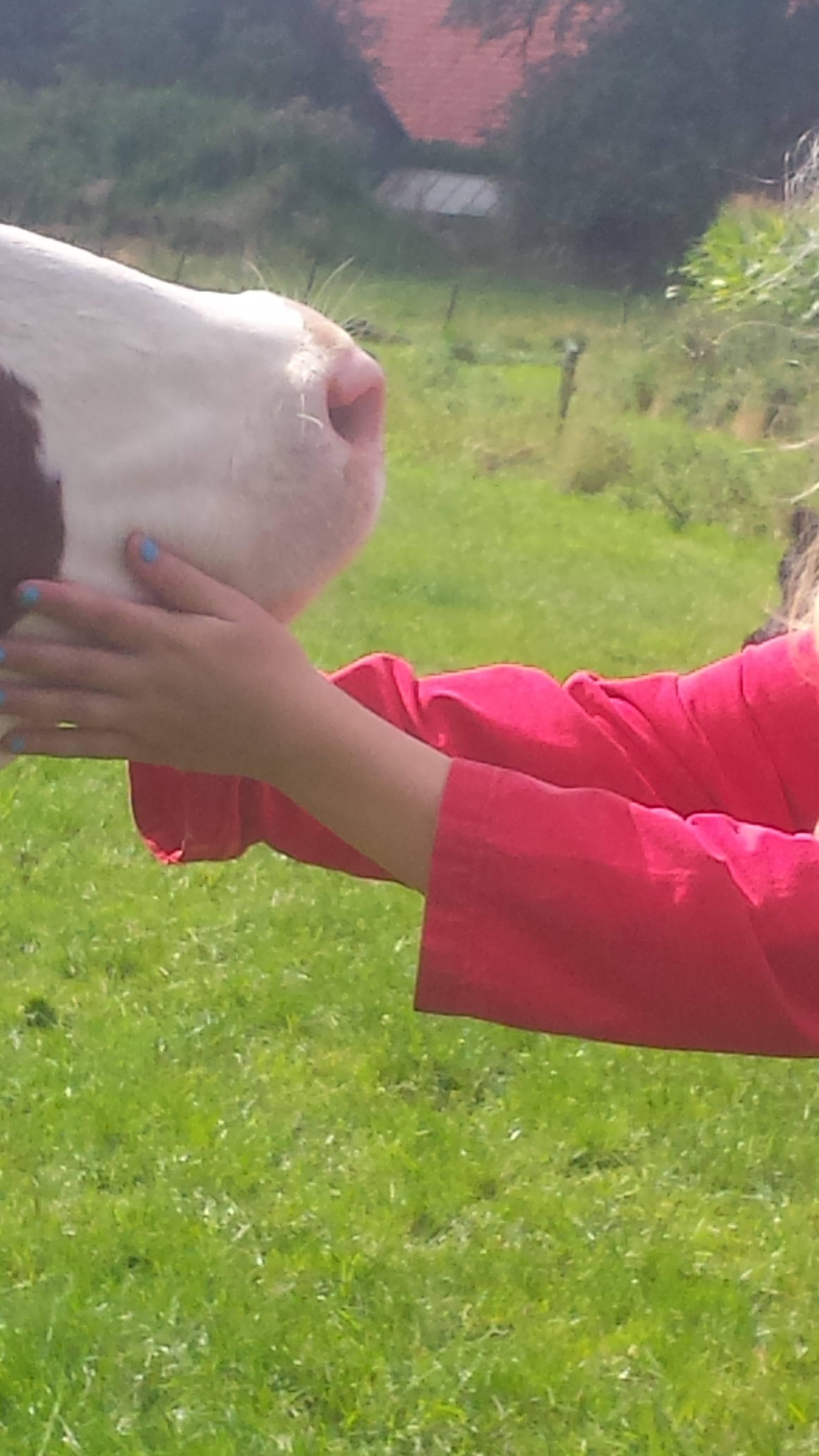 Koeien knuffelen; bij Weidebosch kan het.